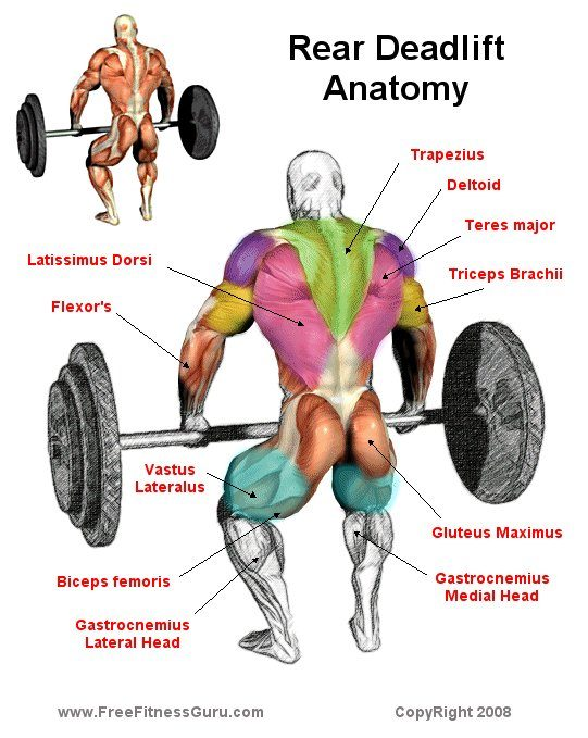 What Muscles Do Deadlifts Work